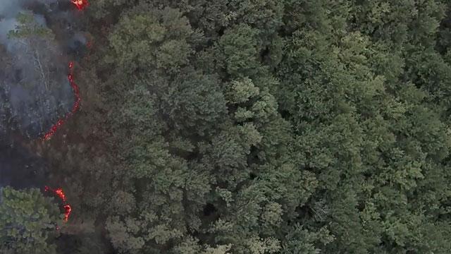 Kiğılı, İzmir'de doğaya 5 bin ağaç kazandıracak