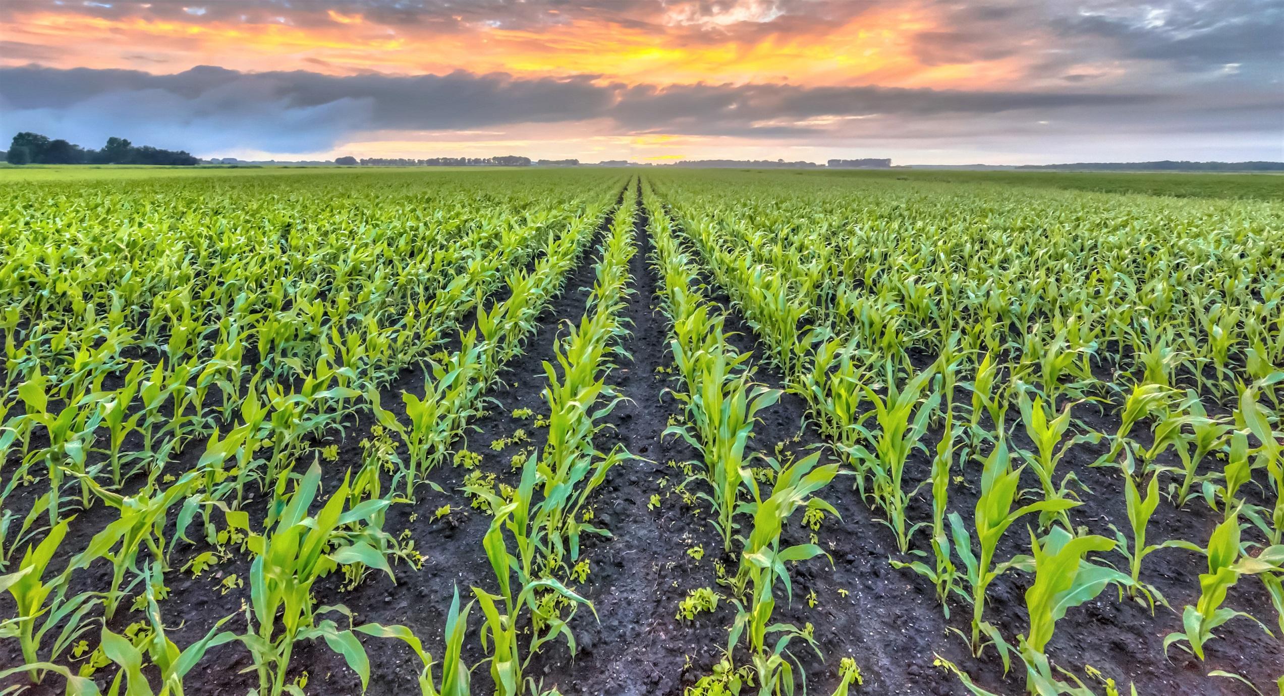 Cargill, kahraman çiftçileri yalnız bırakmadı