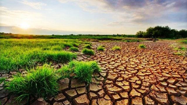 Tarım ve gıdanın geleceği: Zorluklar ve trendler
