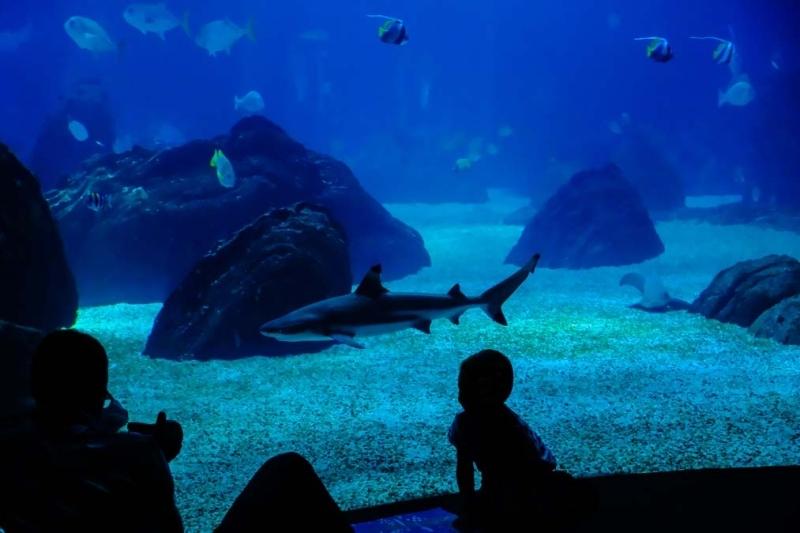 <p>Milletler Parkı içindeki Avrupa'nın en büyük akvaryumlarından olan Lizbon Okyanus Akvaryum'u 450'den fazla türe ve 8 bine yakın canlıya ev sahipliği yapıyor.</p>