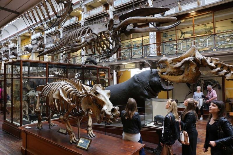 <p>1857'de açılan Doğal Tarih Müzesi ziyaretçilerine sıradışı bir deneyim sunuyor.</p>