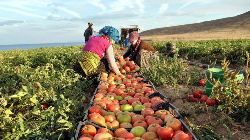 Gıda ithalatı 200 milyon dolar artacak