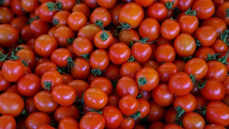 BİM domates şirketi satın aldı